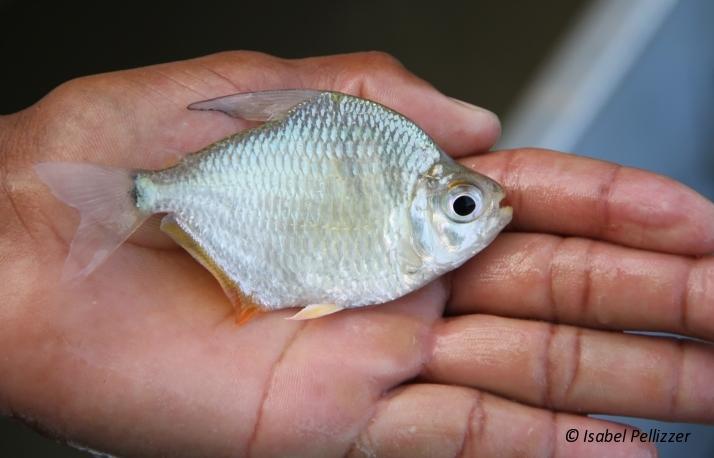 Peixes (ficha técnica)