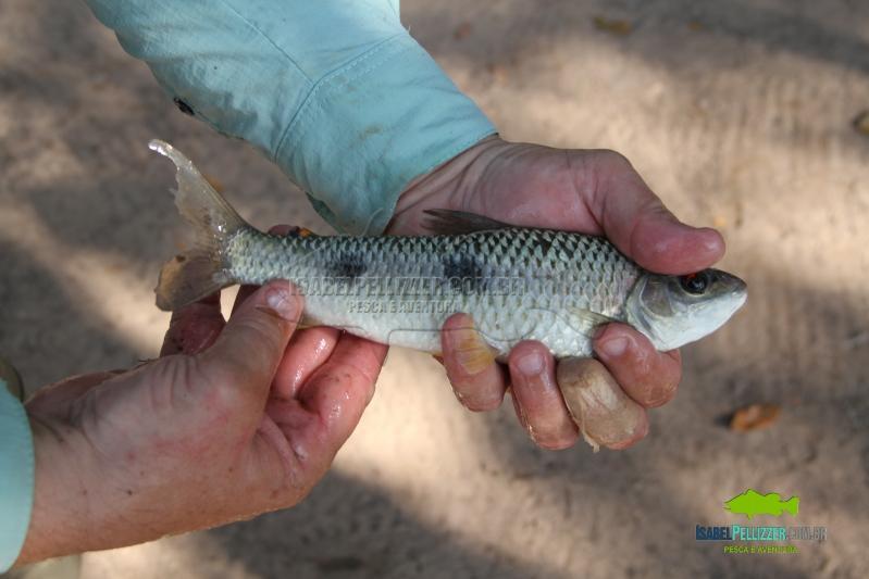 IMG_0278 pesca barranco