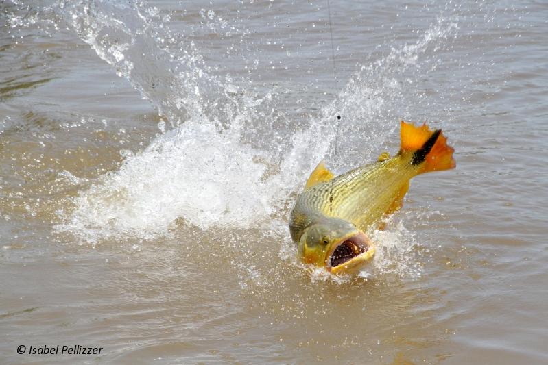 Pescaria no rio Cuiabá em Barão de Melgaço/MT