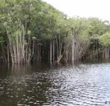IMG_3491_lago (molongó)