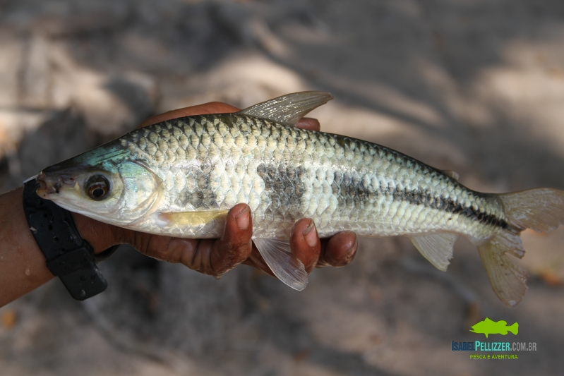 IMG_0285 pesca barranco