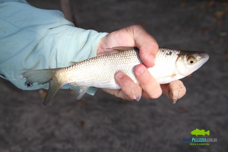 IMG_0289 pesca barranco