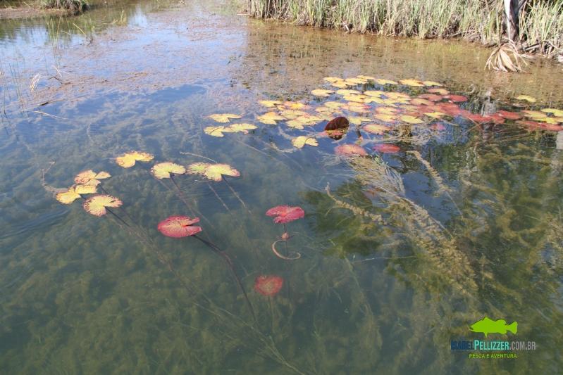 IMG_9109 egetação aquatica e drops no Paranaíba