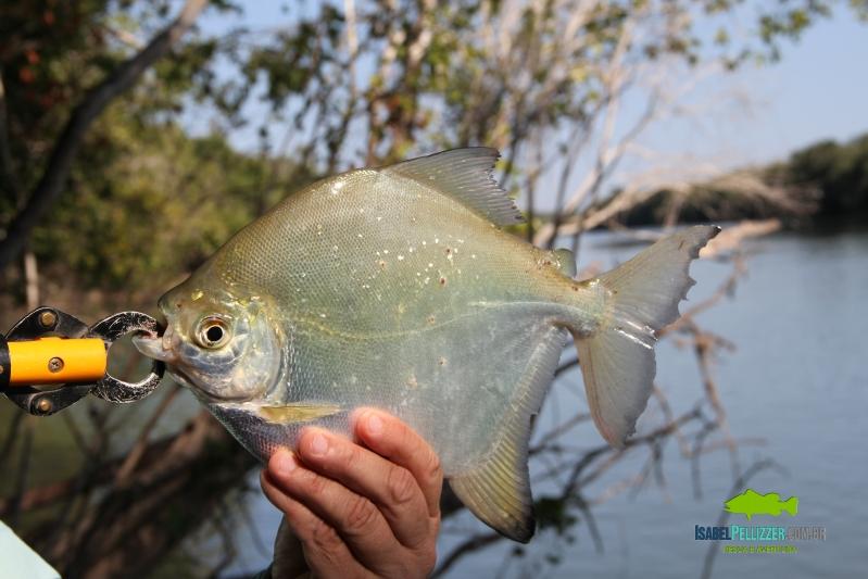 IMG_9866 pesca barranco