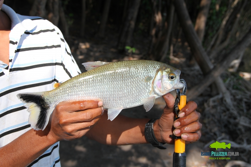 IMG_9867 pesca barranco