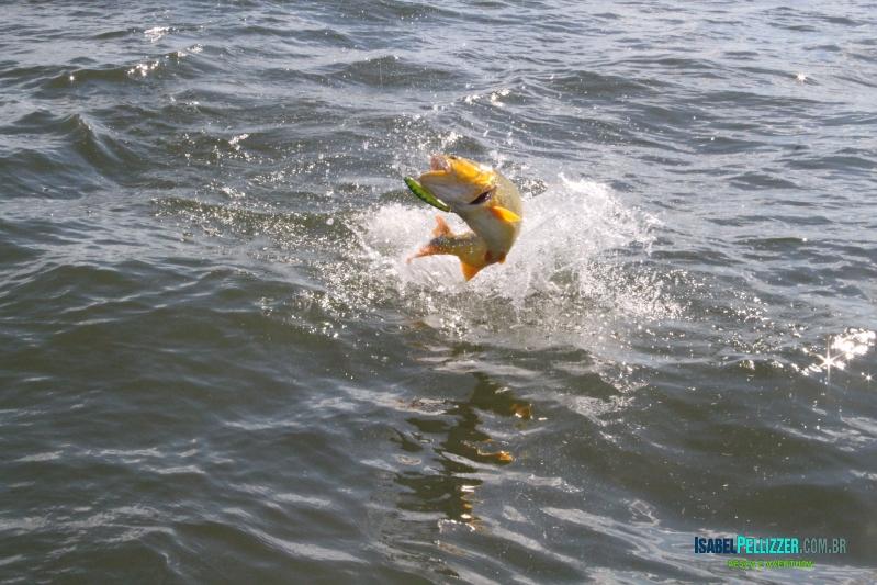 IMG_4615 salto dourado