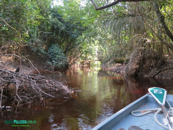 canais acesso lago IMG_3272 dia 14
