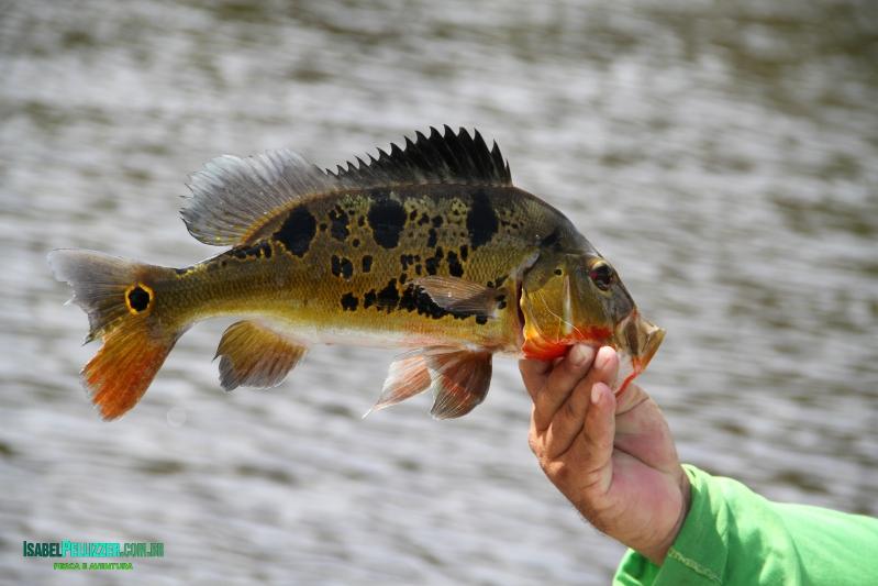 outros peixes 1087