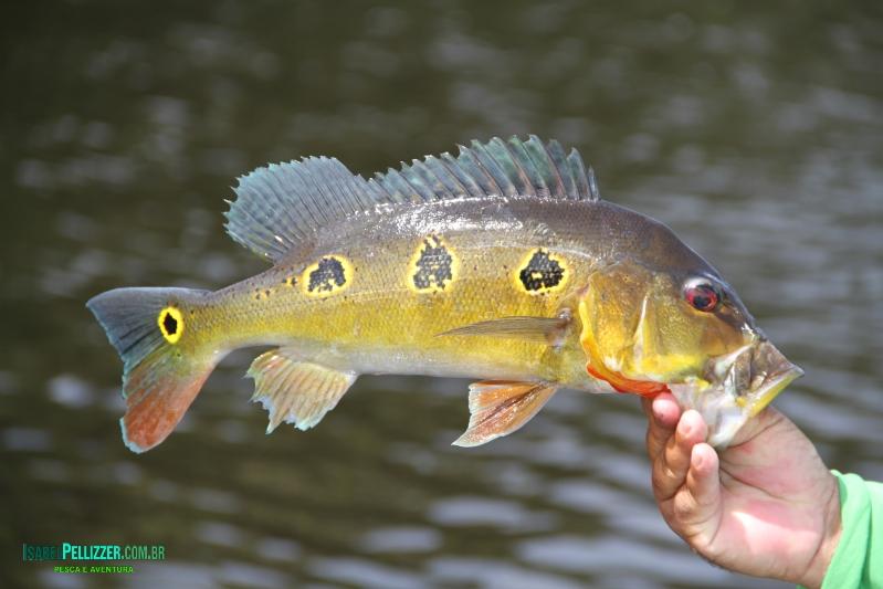 outros peixes  1091