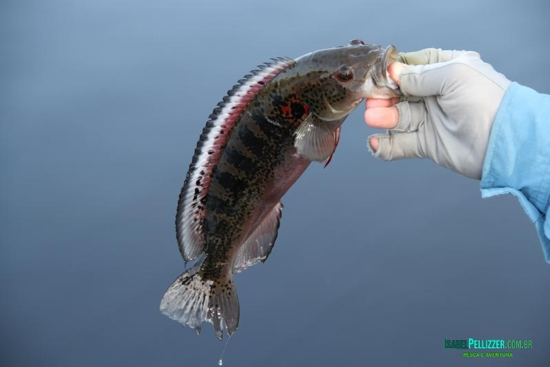 outros peixes  331