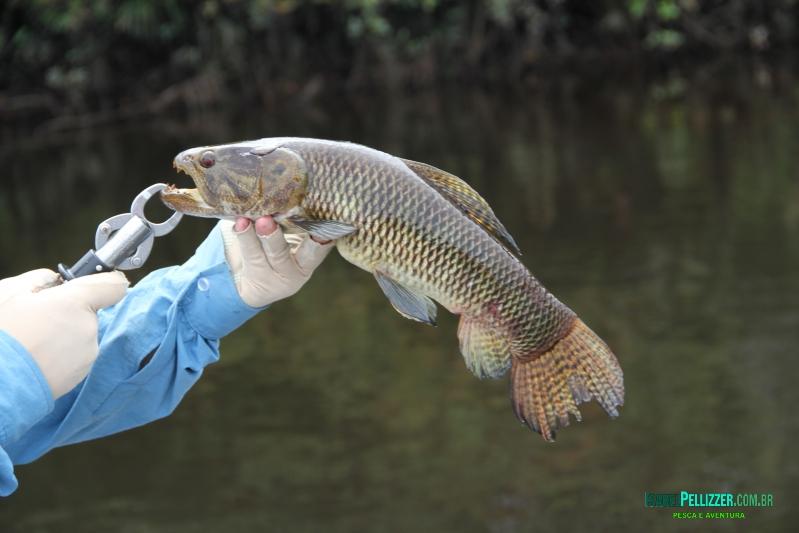 outros peixes 467