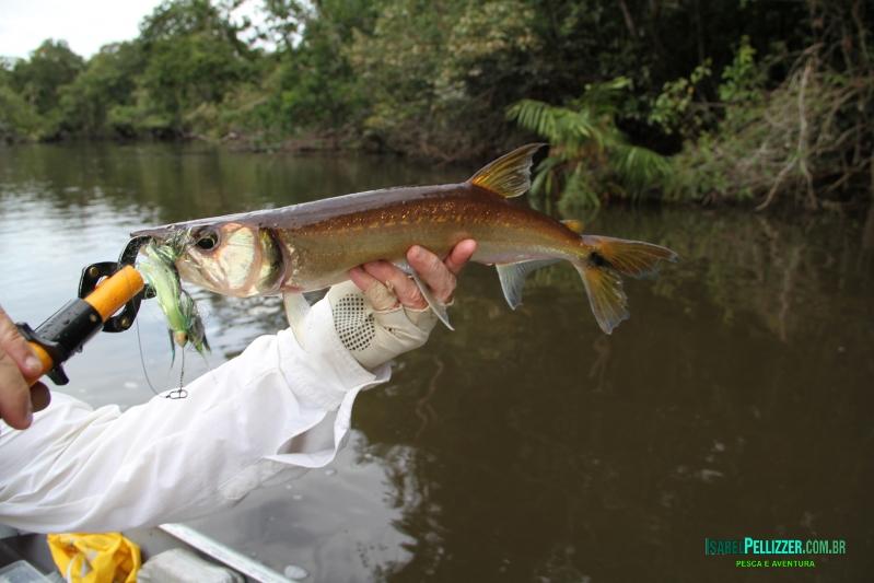 outros peixes 662