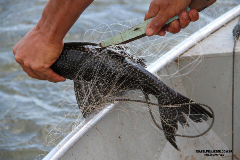 pesca comercial cascudo IMG_8097