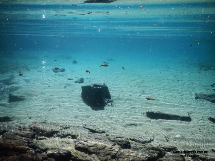 DSCN0366 sub da lagoa pousada