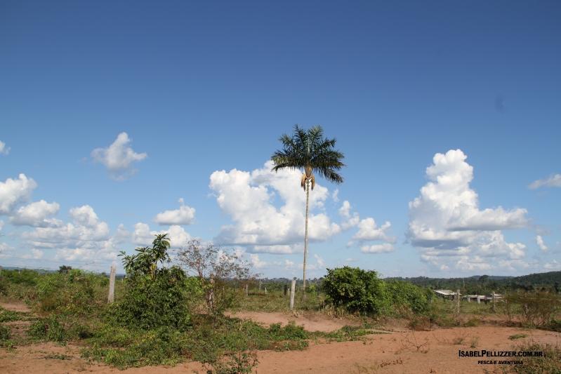 IMG_2408 palmeira norte-sul vista frente