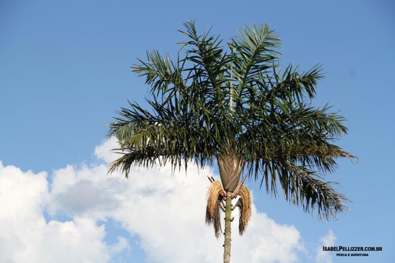 IMG_2410 palmeira norte-sul vista frente