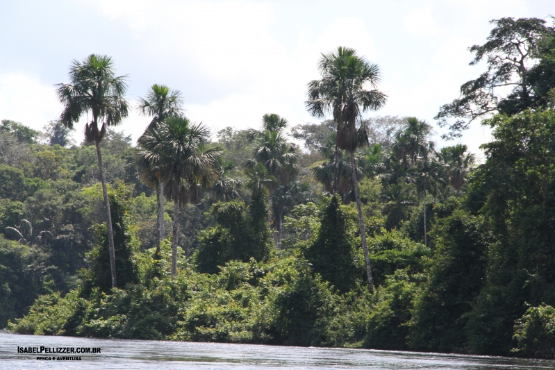 IMG_2698 palmeiras - buritis