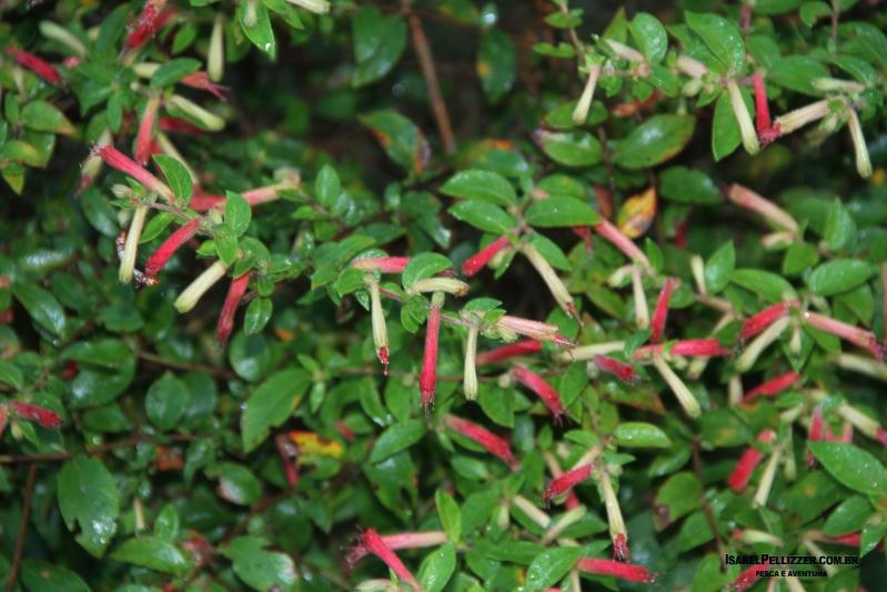 IMG_2912 jardim pousada atrair beija flor