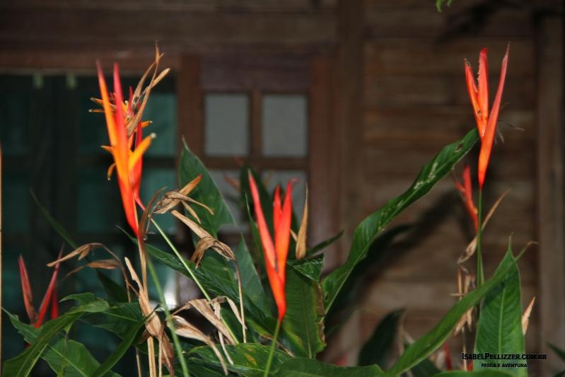 IMG_2924 Helicônia jardim pousada atrair beija flor