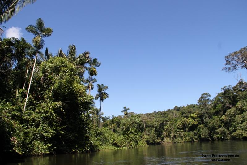 IMG_3158 palmeira norte sul