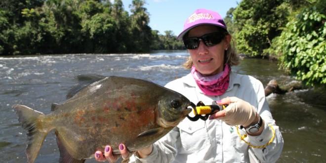Pacu-borracha_rio Azul/Sul do Pará