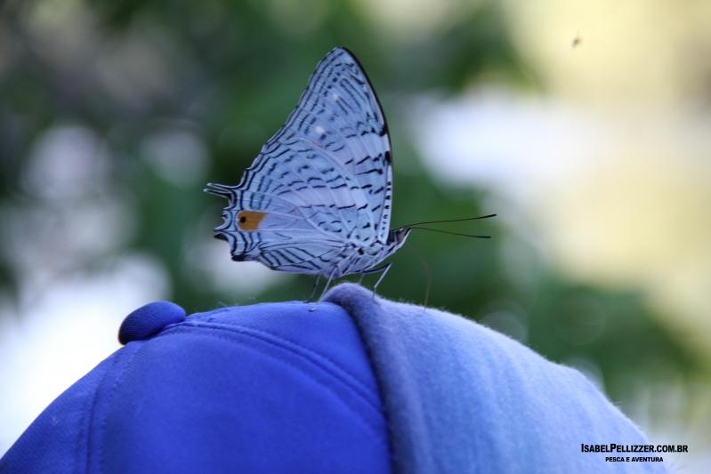 IMG_3464 borboletas