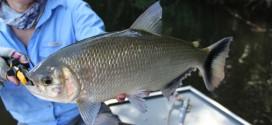 Pesca no Rio Azul em Novo Progresso/PA