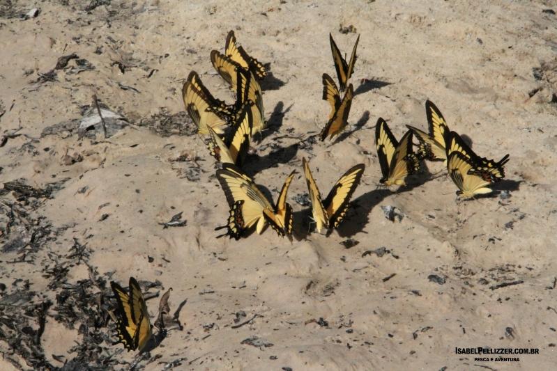 IMG_3586 borboletas