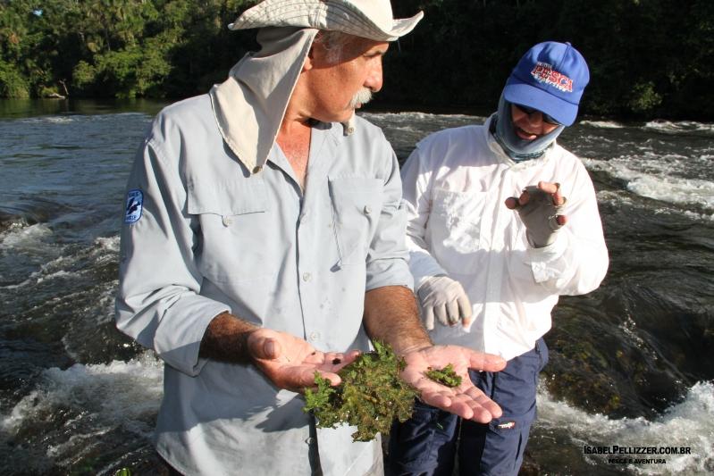 IMG_3651 alga pega pega nas pedras