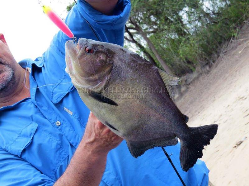 wlad piranha preta redz