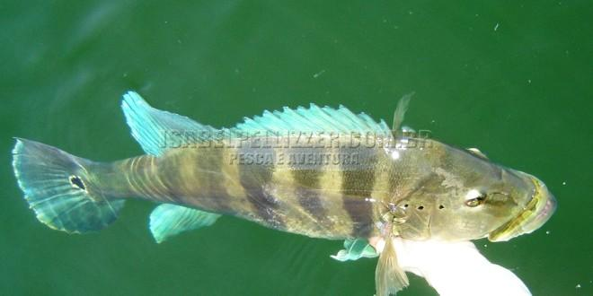 Pesca no Lago Serra da Mesa/GO – 2006 e 2007
