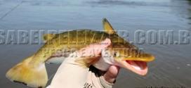Pesca no rio Paraná em Porto Camargo, PR (Icaraíma)