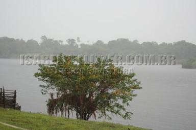 chuva... (ingá-mari-Cassia leiandra)