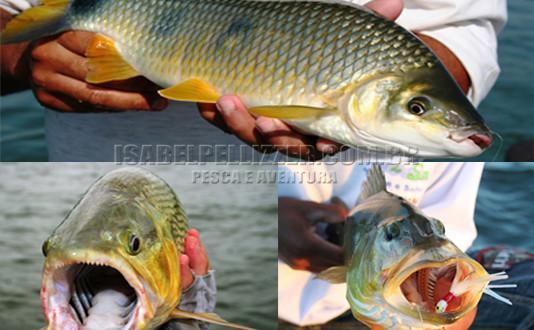 Pesca no rio Paraná em Pauliceia/SP
