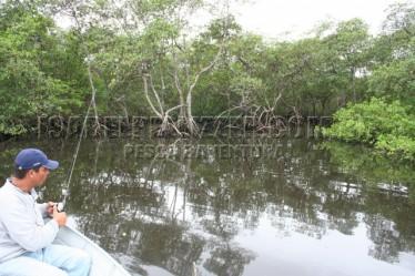 dentro do mangue (4)