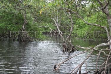 dentro do mangue (6)