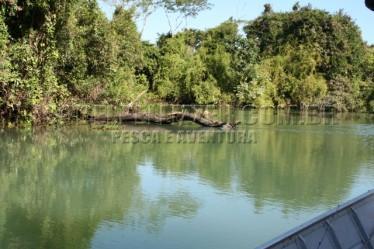 lagos (12)