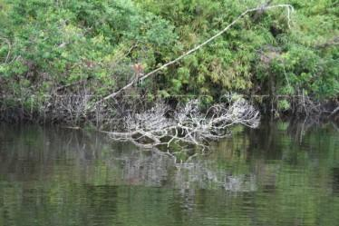 margens com raizes alagadas (10)
