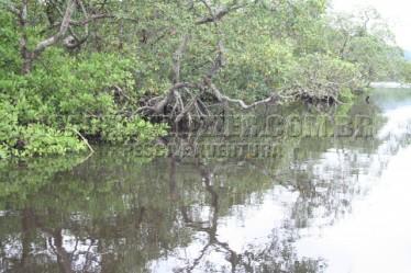margens com raizes alagadas (7)