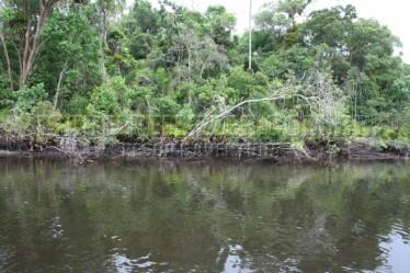 margens e troncos caidos (4)