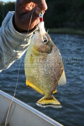 piranha 574